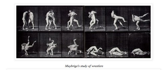 muybridge studies